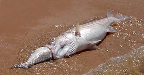 fish-fail